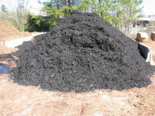 Black Cypress Dyed