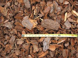 Large Pinebark Nuggets